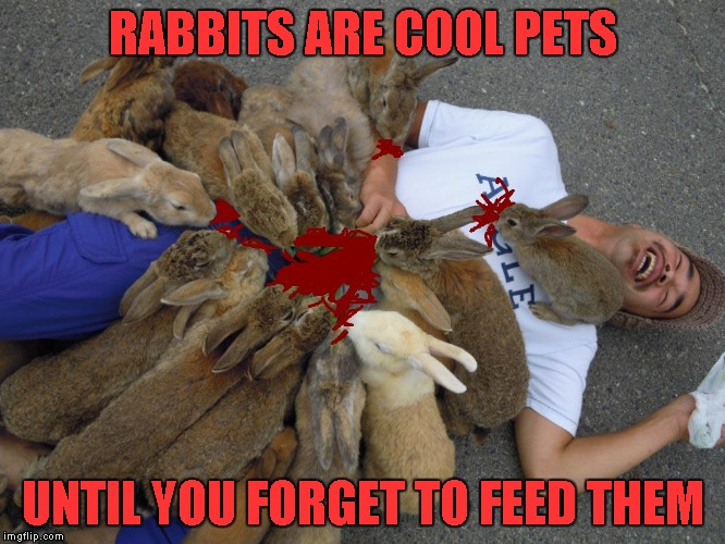 Rabbits don't die...they multiply!!! | RABBITS ARE COOL PETS UNTIL YOU FORGET TO FEED THEM | image tagged in memes,when rabbits attack,funny animals,rabbits | made w/ Imgflip meme maker