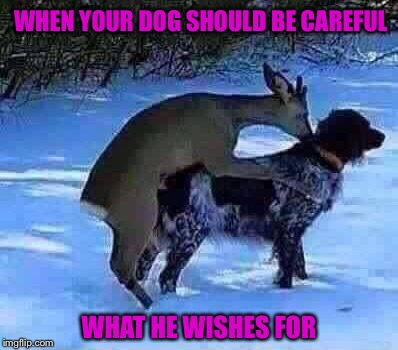 WHEN YOUR DOG SHOULD BE CAREFUL WHAT HE WISHES FOR | made w/ Imgflip meme maker