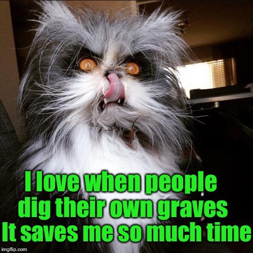 14f37c grumpy cat may be grumpy, but evil cat is downright homicidal