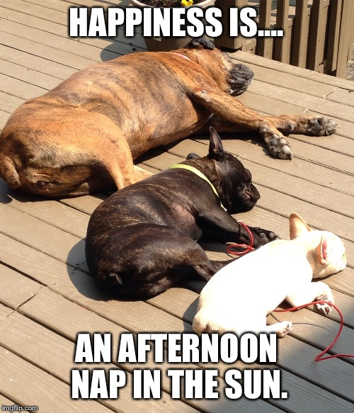 Dog naps | HAPPINESS IS.... AN AFTERNOON NAP IN THE SUN. | image tagged in french bulldog,frenchie,boxer | made w/ Imgflip meme maker
