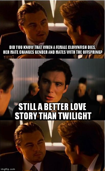 Love in the time of Clownfish | DID YOU KNOW THAT WHEN A FEMALE CLOWNFISH DIES, HER MATE CHANGES GENDER AND MATES WITH THE OFFSPRING? STILL A BETTER LOVE STORY THAN TWILIGH | image tagged in memes,inception,still a better love story than twilight,clownfish,finding nemo | made w/ Imgflip meme maker