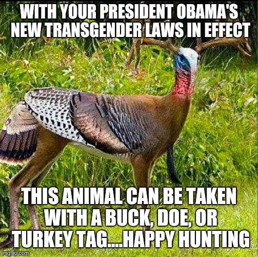 WITH YOUR PRESIDENT OBAMA'S NEW TRANSGENDER LAWS IN EFFECT THIS ANIMAL CAN BE TAKEN WITH A BUCK, DOE, OR TURKEY TAG....HAPPY HUNTING | image tagged in transgender,hunting,confused,multiple,hunting liscense | made w/ Imgflip meme maker