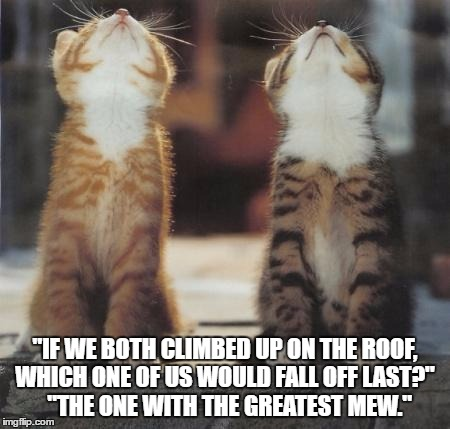 "cats looking up | ""IF WE BOTH CLIMBED UP ON THE ROOF, WHICH ONE OF US WOULD FALL OFF LAST?""   ""THE ONE WITH THE GREATEST MEW."" 
