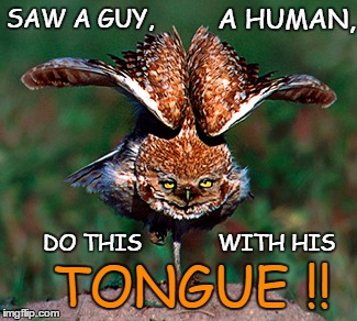 Tongue Twistin' Owl | SAW A GUY, WITH HIS DO THIS TONGUE !! A HUMAN, | image tagged in memes,fold tongue,tongue,silly owl,show off,owl | made w/ Imgflip meme maker