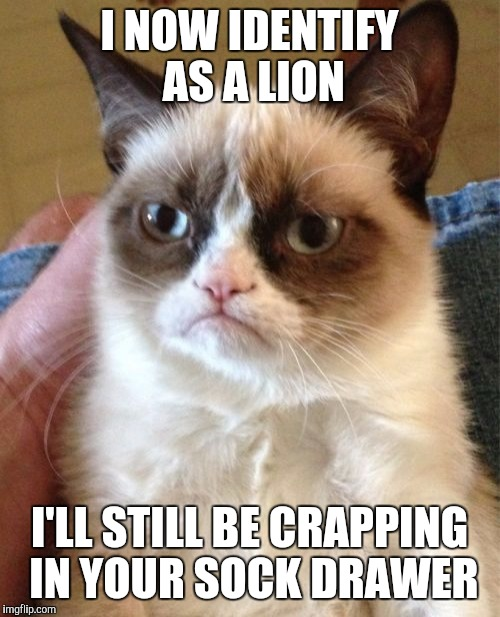 Grumpy Cat Meme | I NOW IDENTIFY AS A LION I'LL STILL BE CRAPPING IN YOUR SOCK DRAWER | image tagged in memes,grumpy cat | made w/ Imgflip meme maker
