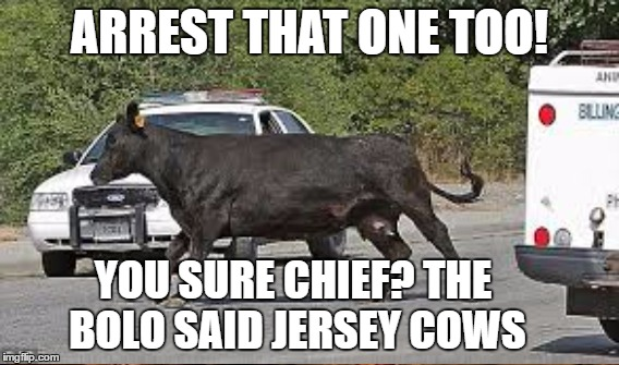 ARREST THAT ONE TOO! YOU SURE CHIEF? THE BOLO SAID JERSEY COWS | made w/ Imgflip meme maker