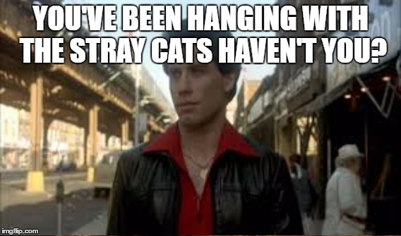 YOU'VE BEEN HANGING WITH THE STRAY CATS HAVEN'T YOU? | made w/ Imgflip meme maker
