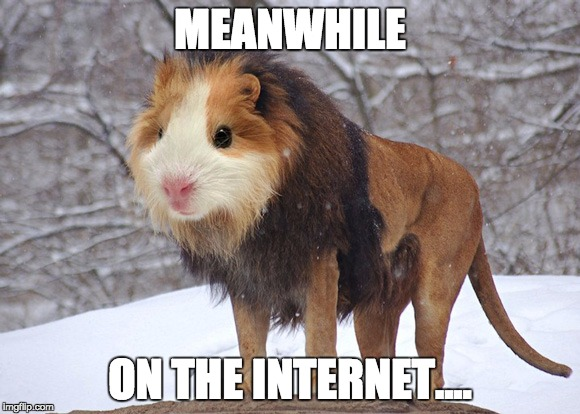 Meanwhile... |  MEANWHILE; ON THE INTERNET.... | image tagged in funny,funny memes,funny animals,animals,what the fuck,too funny | made w/ Imgflip meme maker