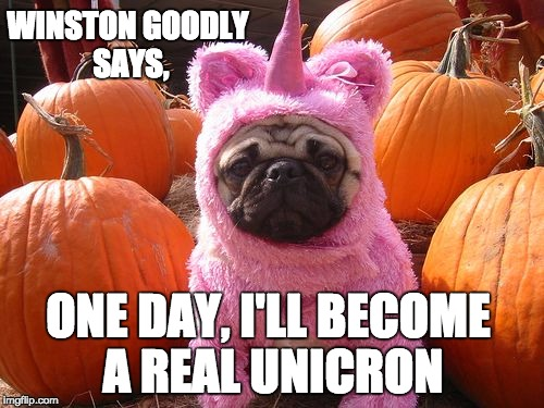 Winston Goodly AKA Unicron Boy | WINSTON GOODLY SAYS, ONE DAY, I'LL BECOME A REAL UNICRON | image tagged in dogs,wish,funny dog,pugs,pumpkin | made w/ Imgflip meme maker