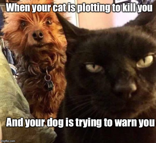 Man's best friend  | When your cat is plotting to kill you And your dog is trying to warn you | image tagged in memes,cats and dogs living together,cats,dogs,funny,warning killer cat | made w/ Imgflip meme maker