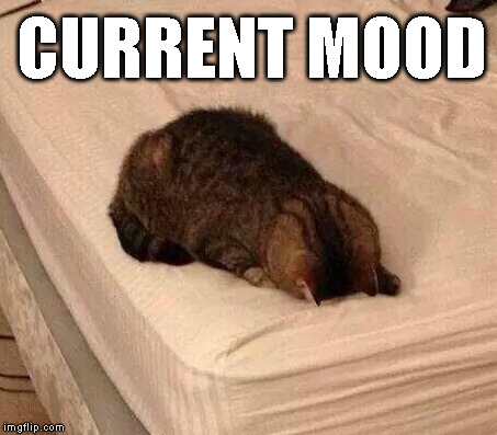 CURRENT MOOD | image tagged in current mood,cats | made w/ Imgflip meme maker