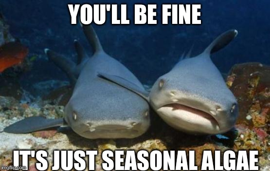 empathetic shark | YOU'LL BE FINE IT'S JUST SEASONAL ALGAE | image tagged in empathetic shark | made w/ Imgflip meme maker