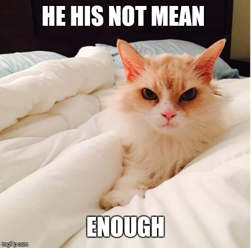 mean and grumpy cat  | HE HIS NOT MEAN ENOUGH | image tagged in mean and grumpy cat | made w/ Imgflip meme maker