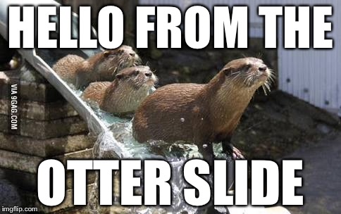 Adele got us screwed  | HELLO FROM THE OTTER SLIDE | image tagged in bad pun,otter,water slide | made w/ Imgflip meme maker