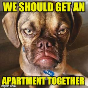 WE SHOULD GET AN APARTMENT TOGETHER | made w/ Imgflip meme maker