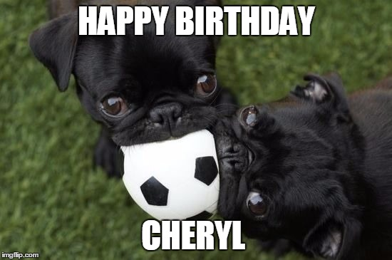 Happy Birthday Cute Meme ~ Pugs are cute imgflip