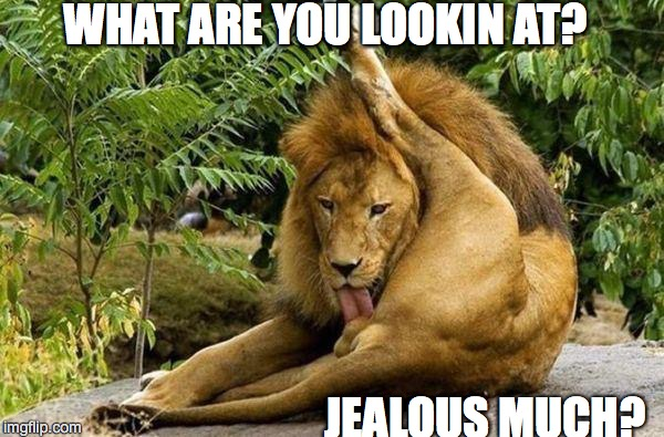 lion licking balls | WHAT ARE YOU LOOKIN AT? JEALOUS MUCH? | image tagged in lion licking balls | made w/ Imgflip meme maker
