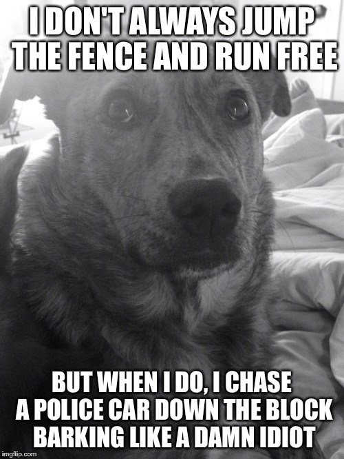 I DON'T ALWAYS JUMP THE FENCE AND RUN FREE BUT WHEN I DO, I CHASE A POLICE CAR DOWN THE BLOCK BARKING LIKE A DAMN IDIOT | image tagged in moo | made w/ Imgflip meme maker