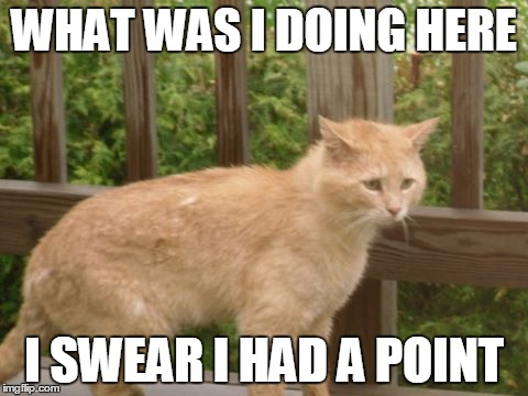 so confused |  WHAT WAS I DOING HERE; I SWEAR I HAD A POINT | image tagged in memes,cat,funny cat,funny cat memes | made w/ Imgflip meme maker