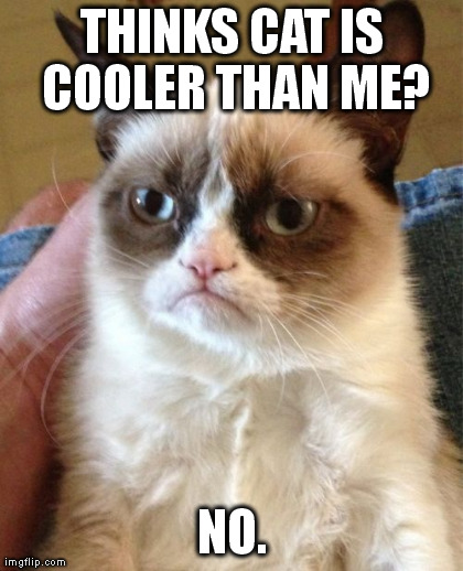 Grumpy Cat Meme | THINKS CAT IS COOLER THAN ME? NO. | image tagged in memes,grumpy cat | made w/ Imgflip meme maker