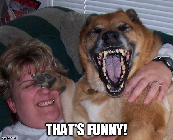 laughing dog | THAT'S FUNNY! | image tagged in laughing dog | made w/ Imgflip meme maker