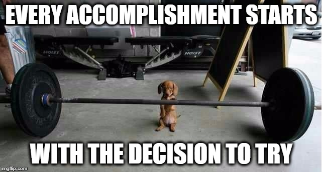 image tagged in memes funny animals funny dogs inspirational quote