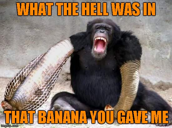 Accepting food from strangers sometimes has it's risks. | WHAT THE HELL WAS IN THAT BANANA YOU GAVE ME | image tagged in monkey morph,memes,funny animals,animals,funny,funky monkey | made w/ Imgflip meme maker