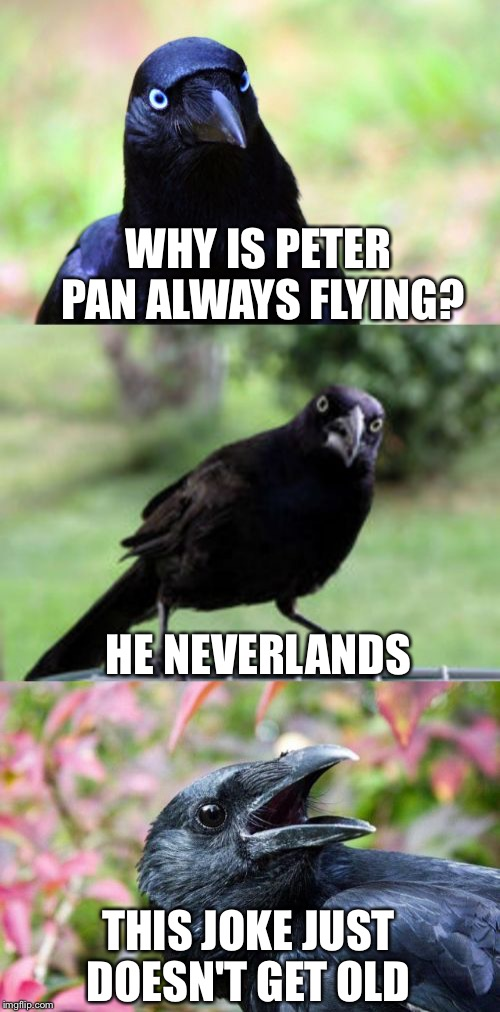 bad pun crow | WHY IS PETER PAN ALWAYS FLYING? HE NEVERLANDS THIS JOKE JUST DOESN'T GET OLD | image tagged in bad pun crow,memes,funny,puns,peter pan,old | made w/ Imgflip meme maker