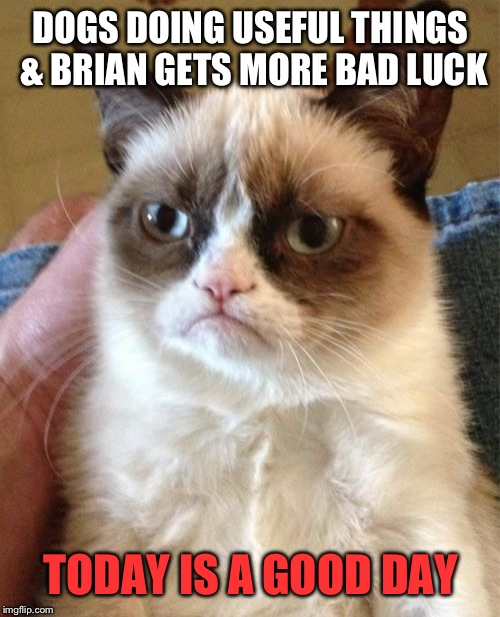 Grumpy Cat Meme | DOGS DOING USEFUL THINGS & BRIAN GETS MORE BAD LUCK TODAY IS A GOOD DAY | image tagged in memes,grumpy cat | made w/ Imgflip meme maker