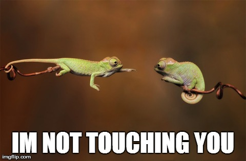 IM NOT TOUCHING YOU | image tagged in funny,animals | made w/ Imgflip meme maker