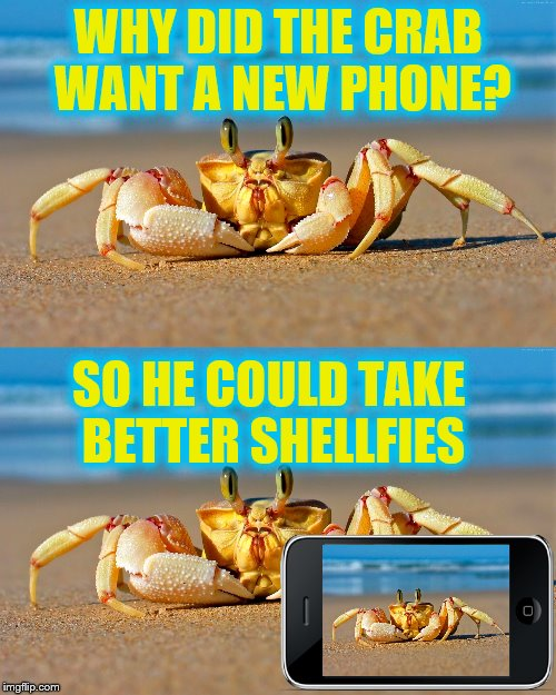 Stop your beachin', I'm sending it now. | WHY DID THE CRAB WANT A NEW PHONE? SO HE COULD TAKE BETTER SHELLFIES | image tagged in memes,funny,animals,crab,cellphone | made w/ Imgflip meme maker