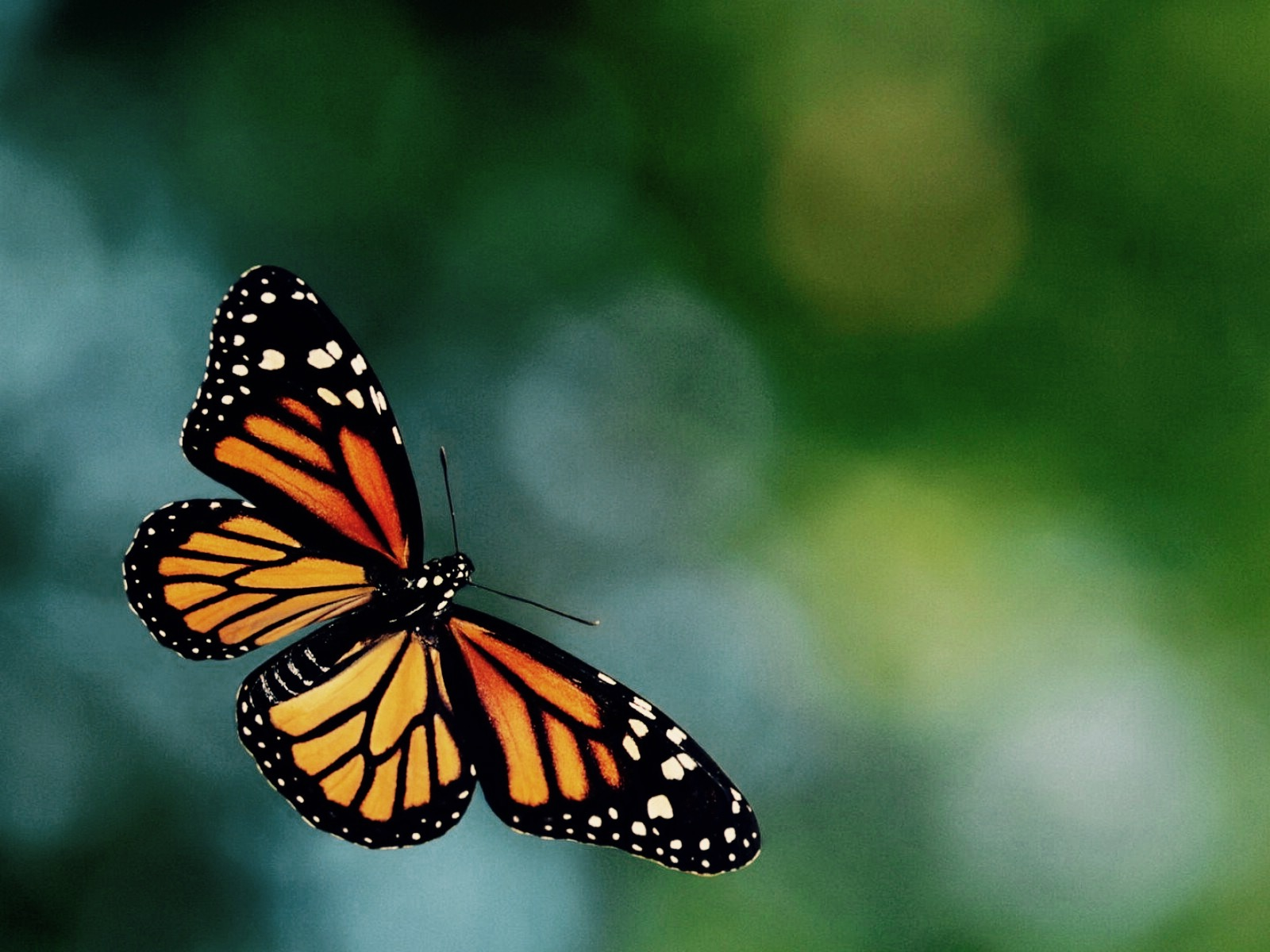 Meme Generator Is This A Butterfly - Malia Lozano