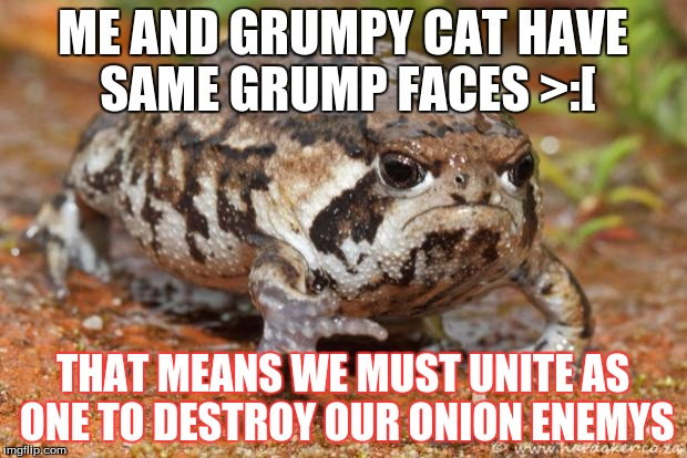 Grumpy Toad | ME AND GRUMPY CAT HAVE SAME GRUMP FACES >:[ THAT MEANS WE MUST UNITE AS ONE TO DESTROY OUR ONION ENEMYS | image tagged in memes,grumpy toad | made w/ Imgflip meme maker