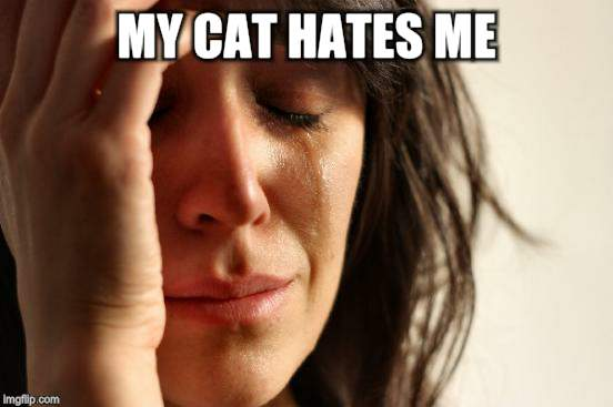 First World Problems Meme | MY CAT HATES ME | image tagged in memes,first world problems | made w/ Imgflip meme maker