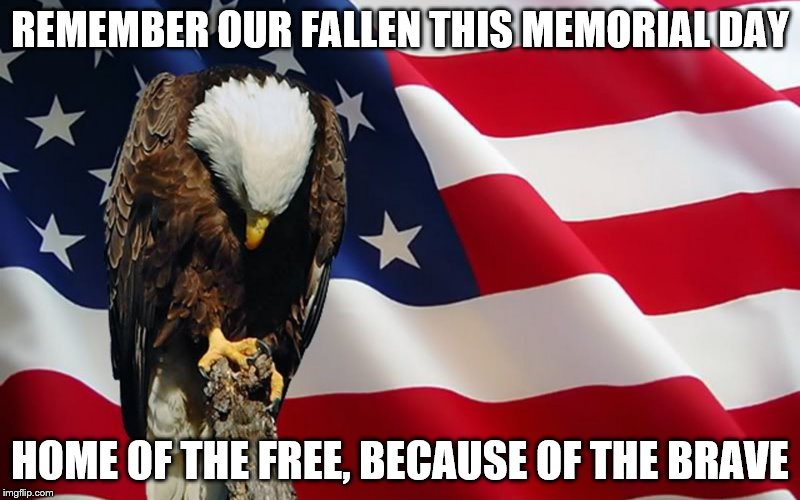 last memorial day | REMEMBER OUR FALLEN THIS MEMORIAL DAY HOME OF THE FREE, BECAUSE OF THE BRAVE | image tagged in last memorial day | made w/ Imgflip meme maker