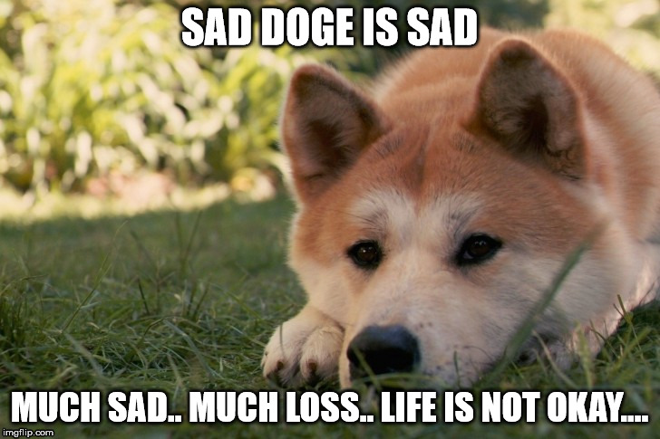 When that special person isn't there anymore :( | SAD DOGE IS SAD MUCH SAD.. MUCH LOSS.. LIFE IS NOT OKAY.... | image tagged in sad doge,emotional,sad | made w/ Imgflip meme maker