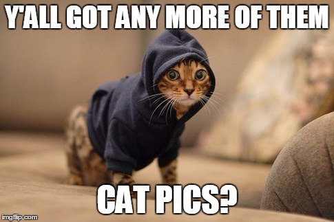 Fatwa ha ha ha ha | Y'ALL GOT ANY MORE OF THEM CAT PICS? | image tagged in memes,hoody cat | made w/ Imgflip meme maker