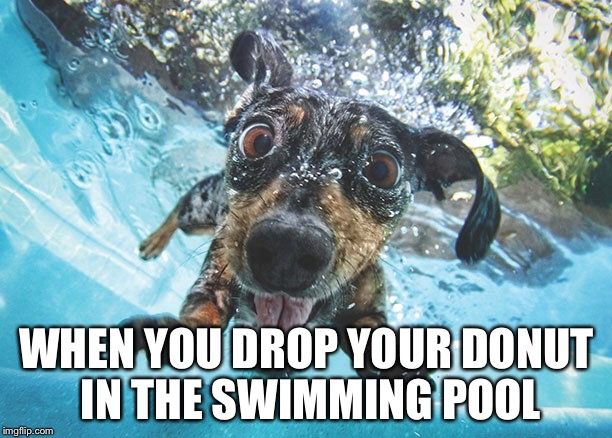 Dog imgflip How to train your dog to swim in the pool
