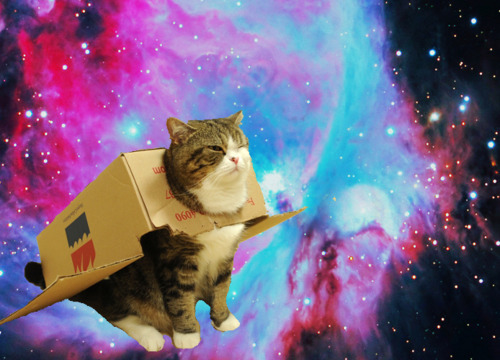 Space cat with box blank template imgflip - Space kitty wallpaper ...