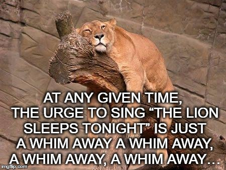 "sleeping lion | AT ANY GIVEN TIME, THE URGE TO SING ""THE LION SLEEPS TONIGHT"" IS JUST A WHIM AWAY A WHIM AWAY, A WHIM AWAY, A WHIM AWAY… 