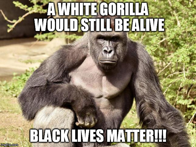 A WHITE GORILLA WOULD STILL BE ALIVE BLACK LIVES MATTER!!! | image tagged in black lives matter,harambe | made w/ Imgflip meme maker
