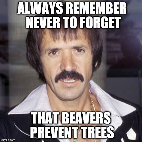 a tree is a terrible thing to waste |  ALWAYS REMEMBER NEVER TO FORGET; THAT BEAVERS PREVENT TREES | image tagged in sonny bono | made w/ Imgflip meme maker