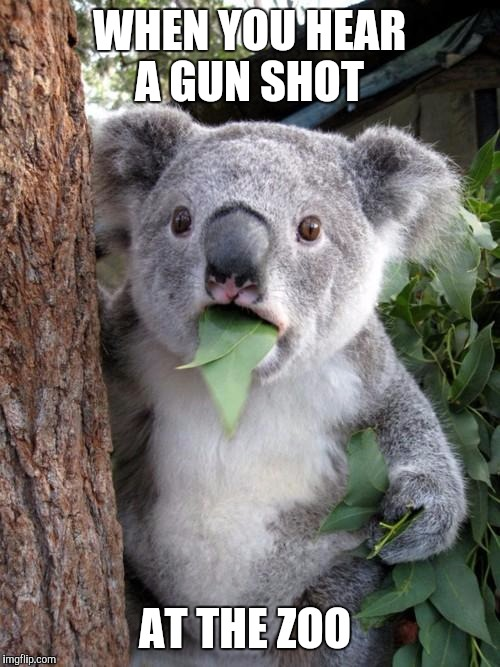 Surprised Koala Meme | WHEN YOU HEAR A GUN SHOT AT THE ZOO | image tagged in memes,surprised koala | made w/ Imgflip meme maker