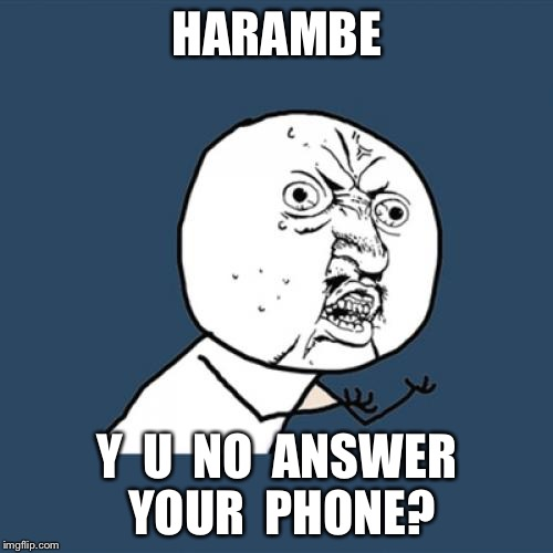 Y U No Meme | HARAMBE Y  U  NO  ANSWER YOUR  PHONE? | image tagged in memes,y u no | made w/ Imgflip meme maker