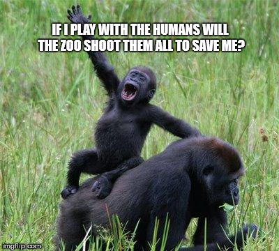 Gorilla waving | IF I PLAY WITH THE HUMANS WILL THE ZOO SHOOT THEM ALL TO SAVE ME? | image tagged in gorilla waving | made w/ Imgflip meme maker