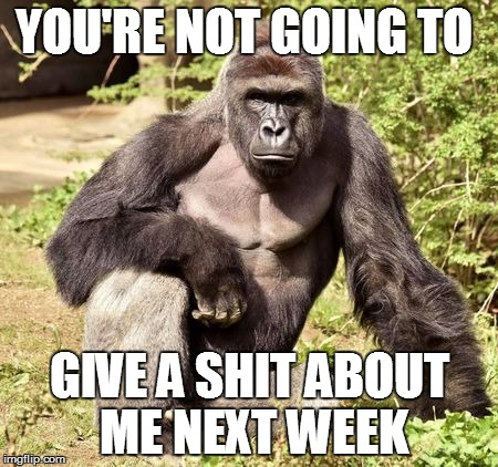 Move On... | YOU'RE NOT GOINGTO GIVE A SHIT ABOUT ME NEXT WEEK | image tagged in cincinnati,zoo,gorilla | made w/ Imgflip meme maker