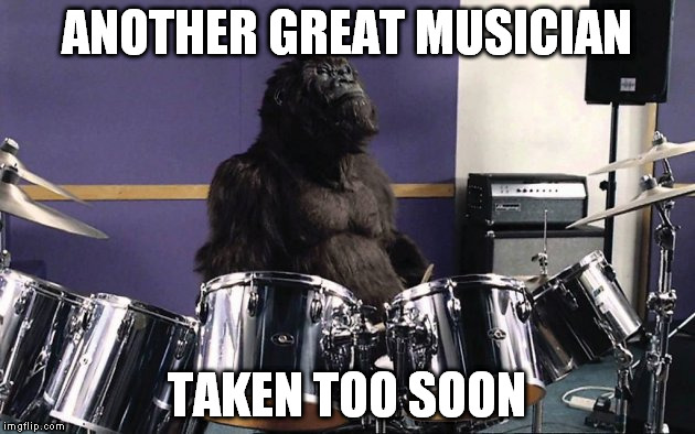 Damn you 2016..... | ANOTHER GREAT MUSICIAN TAKEN TOO SOON | image tagged in gorilla,harambe | made w/ Imgflip meme maker