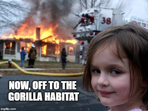 Disaster Girl | NOW, OFF TO THE GORILLA HABITAT | image tagged in memes,disaster girl,gorilla | made w/ Imgflip meme maker