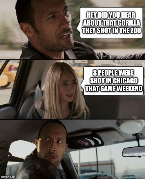 I'm so tired of people making such a big deal over this stupid Gorilla. HE'S DEAD, MOVE ON WITH YOUR LIVES. |  HEY DID YOU HEAR ABOUT THAT GORILLA THEY SHOT IN THE ZOO; 8 PEOPLE WERE SHOT IN CHICAGO THAT SAME WEEKEND | image tagged in memes,the rock driving,gorilla,funny | made w/ Imgflip meme maker