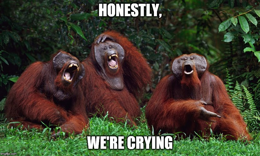 laughing orangutans | HONESTLY, WE'RE CRYING | image tagged in laughing orangutans | made w/ Imgflip meme maker